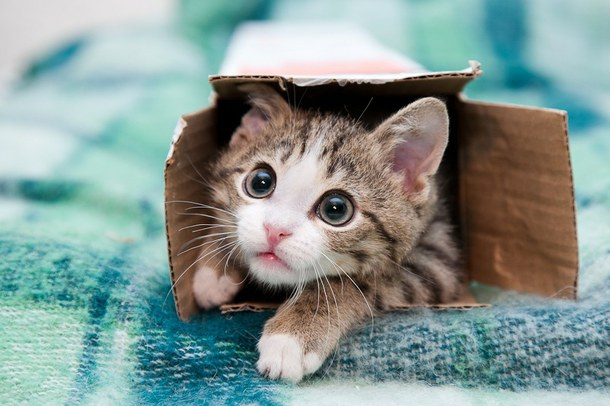 box-cat-coming-out-hiding-favim-com-2357698